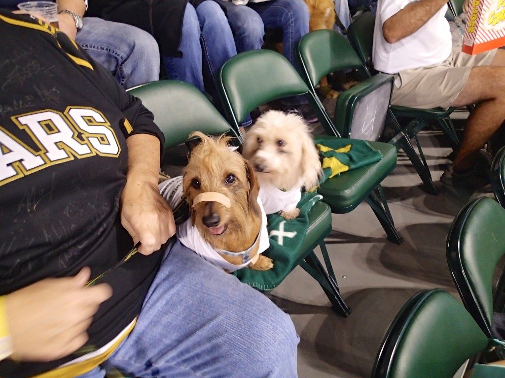 It was bring your dog night..but we did not know until we got there.