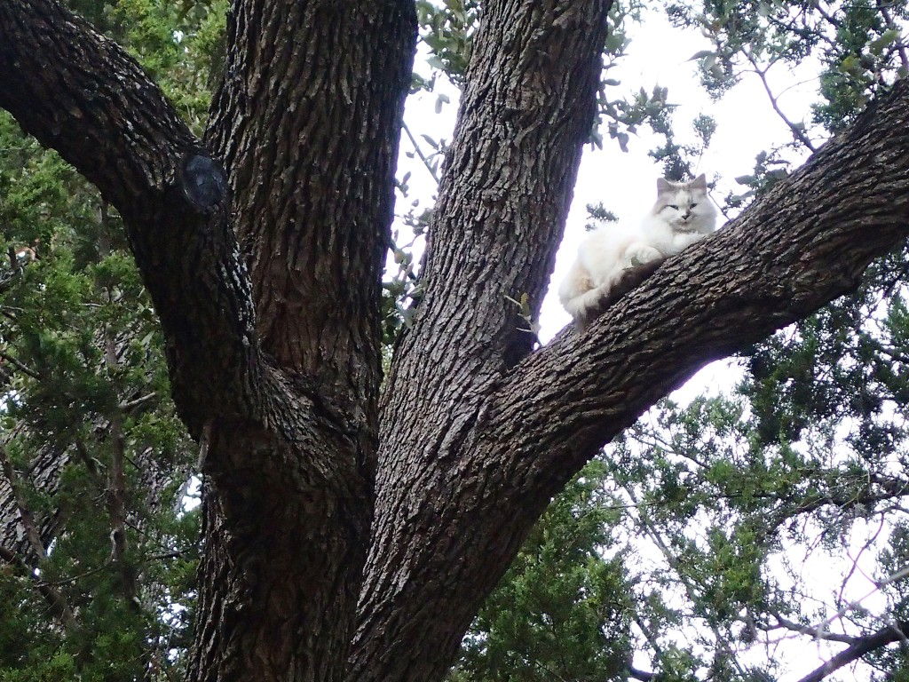 Cat in a TREE!!