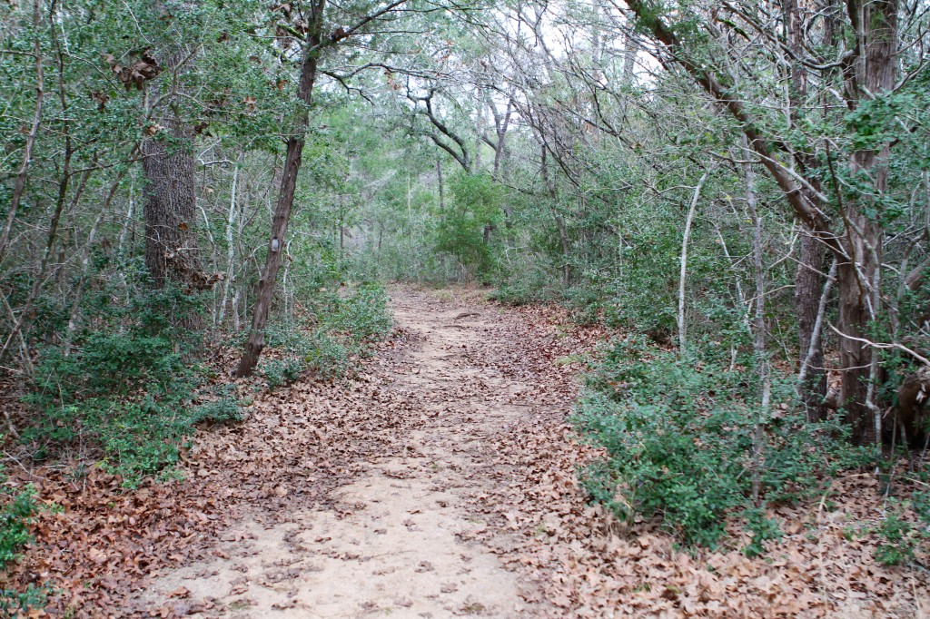 The 7 mile Trail