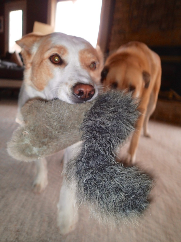 Playing with the Squirrel