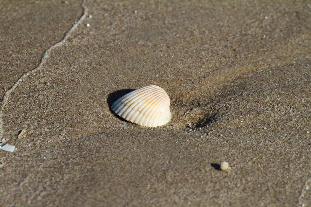last shell on the beach