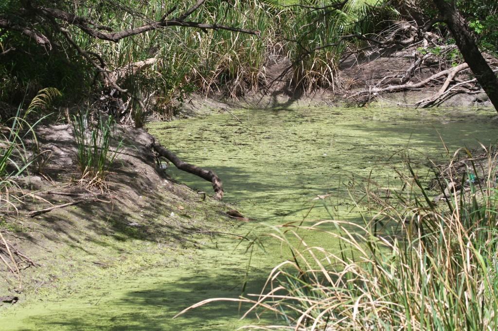 One last swamp