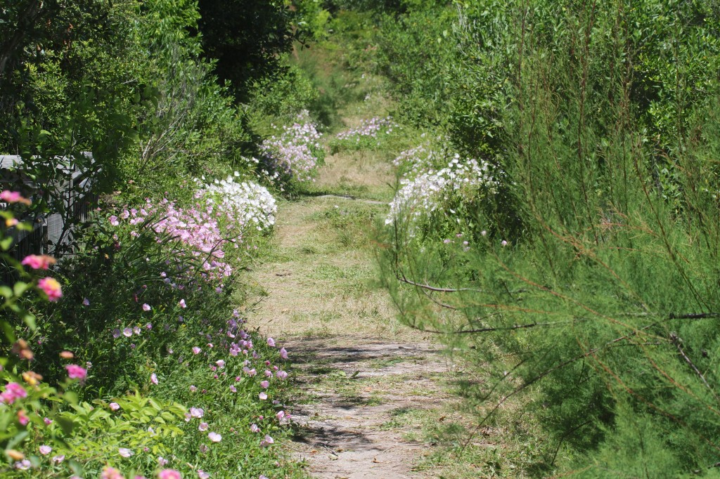 Wonderful path lined with Flowers
