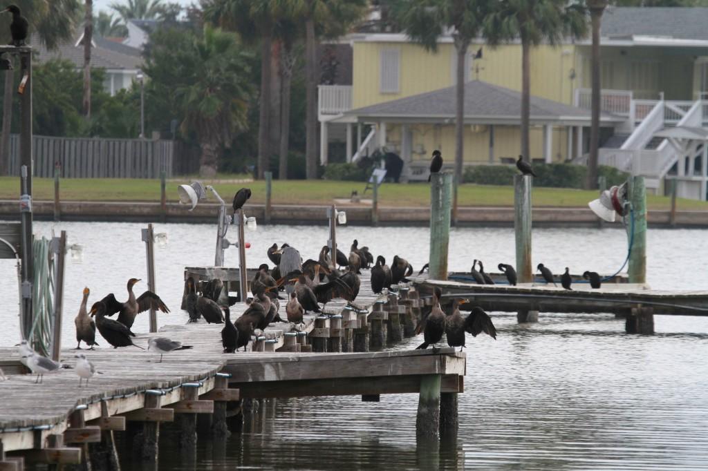 Cormorants waking up