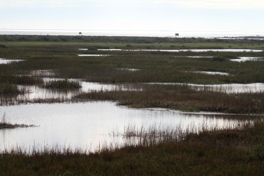 Wetlands S. of rock port