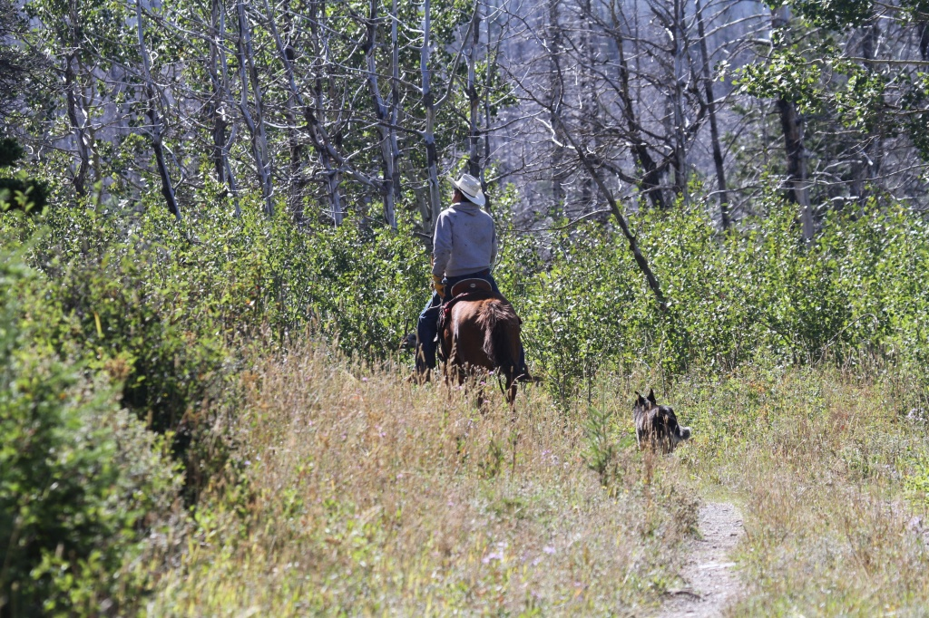 We Saw this guy a few times he was looking for a few horses that got loose