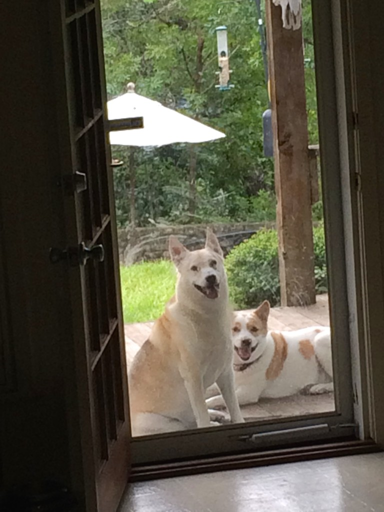 Can we come inside?