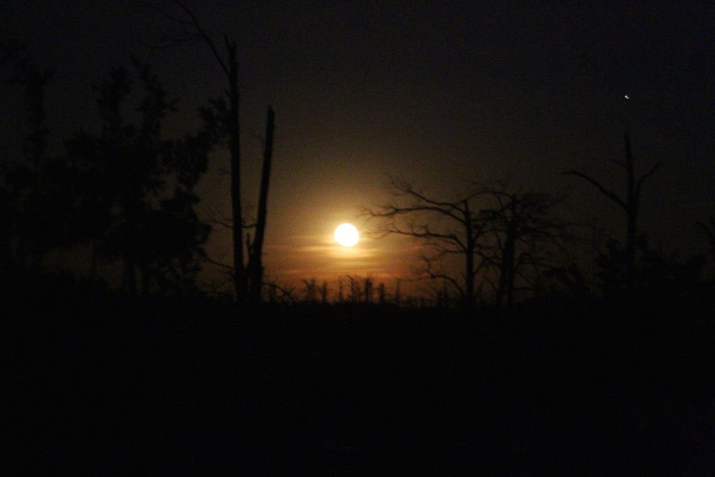 Moon Rise At Bastrop St. Park from our Campsite