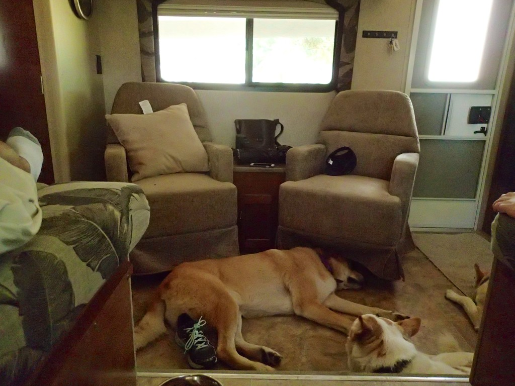The Big guy gets comfy in the RV...I think He is used to it