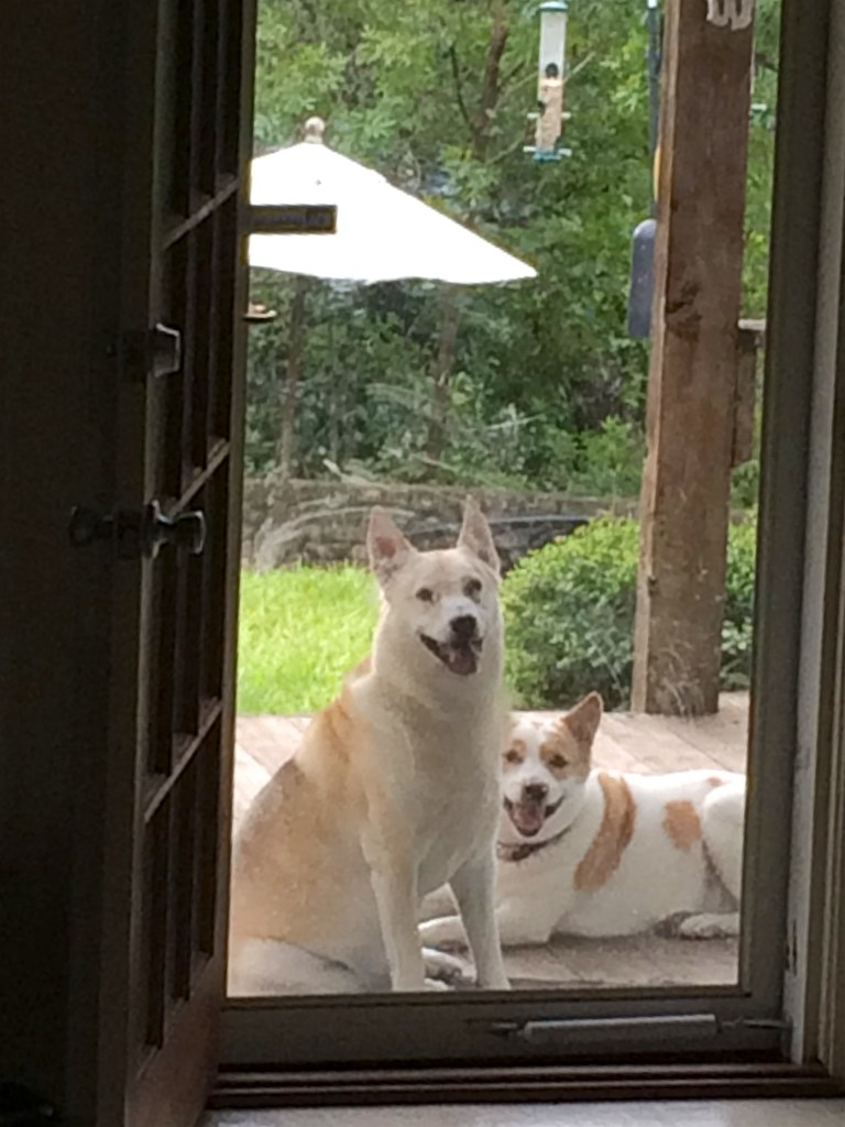 Chief and Cachina turn on the Charm at the back door