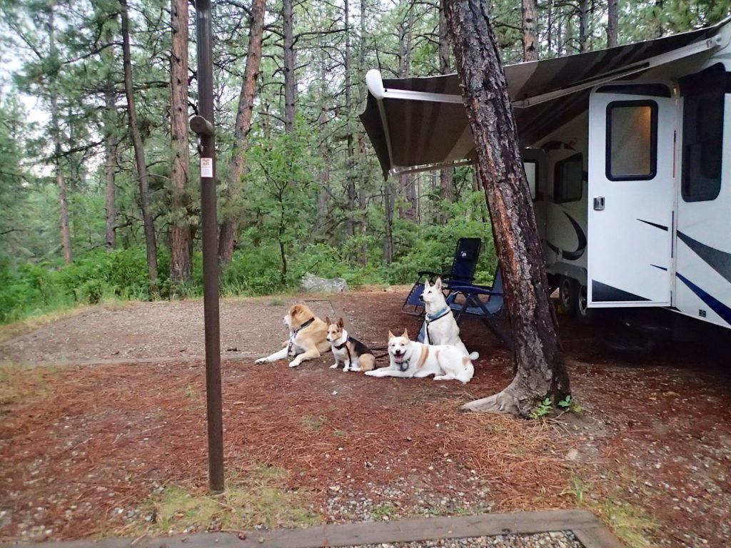Campsite in Durango Colorado