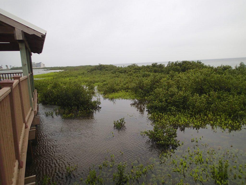 Laguna Madre S. Padre Island
